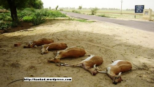 अनेक वजहें है हिरणों की असमय मौत की
