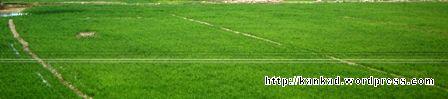 खेत खेत हरे �रे