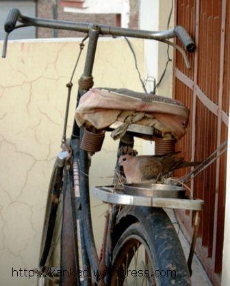 छत पर रखी साइकिल के करियर पर ही घोंसला बना लिया इस कमेडी ने..