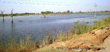 बड़ोपल से लेकर रावतसर तक एक बडे़ इलाके में सेम या जलरिसाव ने जमीनों को दलदल में बदल दिया है.