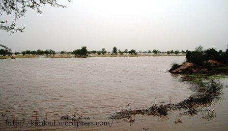 सूरतगढ केंद्रीय कृषि फार्म से बहती हुई घग्घर नदी का दृश्य्