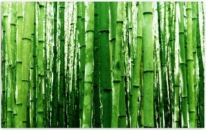 bamboo_green_light-t2